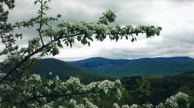 View of Mount Greylock in Spring with apple blossoms.